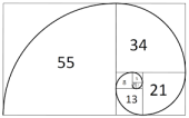 Fibonacci snail